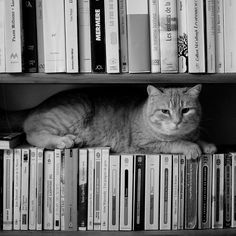 The cat that liked books (by Hel Des) Cat + Books = Beautiful Creatures, Animals Beautiful, Cute Animals, Crazy Cat Lady, Crazy Cats, I Love Cats, Cool Cats, All Gods Creatures, I Love Books