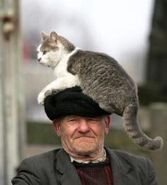 Başüstüne Kedi