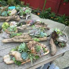 Image result for succulent with driftwood wedding centrepieces