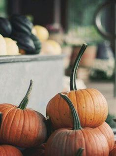 I don't know what it is about pumpkins, but they just make me feel so happy!