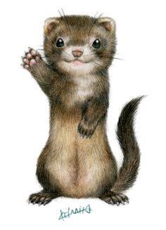 Ferret illustration - Google 検索