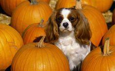 Pumpkin precious!! OMGoodness.... that is soooo darn cute!!
