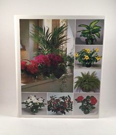 Success With House Plants 2 Ring Binder Book With Hundreds of Inserts 1980's