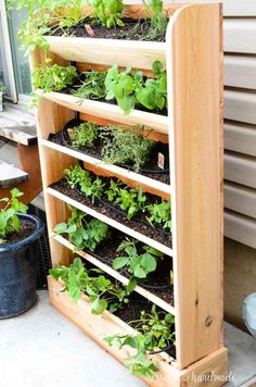 DIY Vertical Garden with Drip Watering System Create a DIY vertical garden for the perfect small space garden solution. This cedar vertical garden has a lot of space to grow your favorite herbs and plants. And the built in drip watering system Cedar Garden, Diy Herb Garden, Fruit Garden, Herbs Garden, Palette Herb Garden, Herb Garden Planter, Porch Garden, Herb Planters, Diy Porch