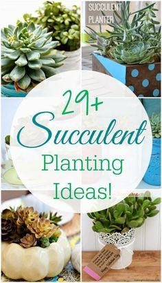 Best DIY Projects: 29 Amazing Succulent Planting Ideas - the perfect little indoor plant!