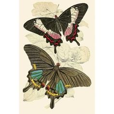 Foreign butterflies / - Biodiversity Heritage Library I was thinking caterpillar turning into a butterfly the colors for the butterfly would look cool Vintage Butterfly, Butterfly Art, Botanical Drawings, Botanical Art, Butterfly Illustration, Illustration Art, Painting Prints, Art Prints, Nature Prints