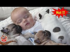 Synthetic Video Clips Of Pet And Children Frolic *** Animal Tracks For K. French Bulldog Puppies, Dogs And Puppies, Talking Dog Video, Animals And Pets, Cute Animals, Animal Tracks, Baby Kids Clothes, Slammed, Baby Sleep