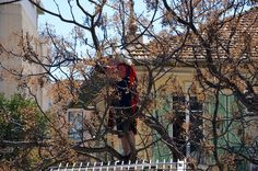 Le Berger regarde tous les matchs dans son arbre.Ca va être dur dans le nouveau stade...