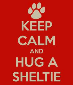 Keep calm and hug a sheltie~~nothing is better than a snuggly sheltie. :-)