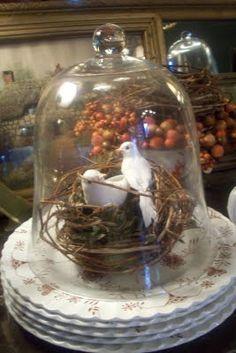 beautiful birds under a cloche