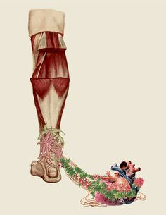 Stunning Anatomical Collages by Travis Bedel
