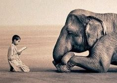 Ashes and Snow - by Gregory Colbert. I saw this nomadic exhibit when it was in Los Angeles in The images are stunning in their tranquility. I particularly love this one of a boy reading to an elephant. Beautiful Creatures, Animals Beautiful, Cute Animals, Large Animals, Wild Animals, Elephant Love, Elephant Gun, Happy Elephant, Small Elephant