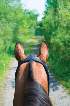 Is My Horse Too Young for Trail Riding