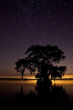 """Stars over the Louisiana Swamp"" -- Beautiful!"