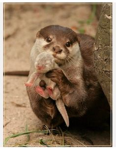 Even otter mommies show off their babies.