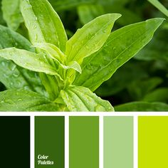 color matching, color of greens, color of the year according to Pantone, color of young greens, color solution for house, dark green color, green color, greenery color, light green color, lime color, Pantone color 2017, shades of green, shades of lime, shades of lime green.