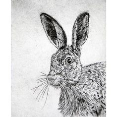 Hare portrait, Framed Drypoint Print, Edition of 24, H33 x W 28cm