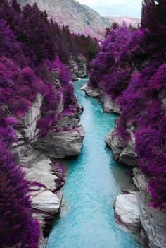 The Purple Forest in Scotland