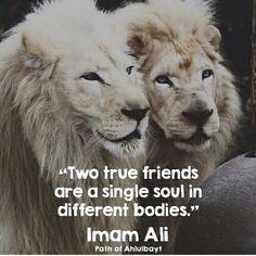Imam Ali ibn Abī Ṭālib (ع) Hazrat Ali Sayings, Imam Ali Quotes, Hadith Quotes, Allah Quotes, Muslim Quotes, Quran Quotes, Religious Quotes, Quotes Sahabat, Rumi Quotes