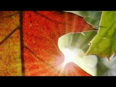 ABRAHAM HICKS--TIME TO TELL A NEW STORY - YouTube