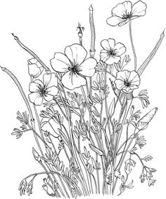 Golden Poppy or California Poppy coloring page Free Printable Coloring Pages Poppy Coloring Page, Flower Coloring Pages, Coloring Book Pages, Coloring Sheets, Popular Flowers, Simple Line Drawings, California Poppy, Art Et Illustration, Free Printable Coloring Pages