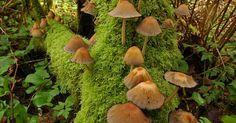 Mushroom Colony On Log Print By Deborah Ketelsen