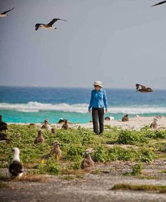 While there is an emergency landing strip on the Midway atoll, commercial flights cannot be taken there. Midway Atoll, Great Places, Beautiful Places, Natural Structures, Beach Pictures, Travel Pictures, World Images, Hawaiian Islands, Island Beach