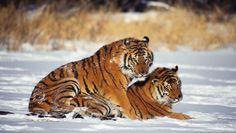 animais-abraço