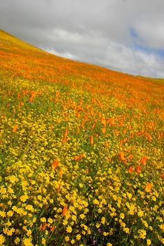 Find out what wildflowers are blooming in your neck of the woods from OutsideMom.com