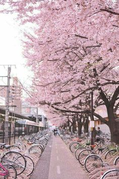 Japan street of sakura: Cherry blossom Beautiful World, Beautiful Places, Hello Beautiful, Amazing Places, Cherry Blossom Japan, Pink Blossom, Japanese Cherry Blossoms, Japanese Blossom, Tree Wallpaper