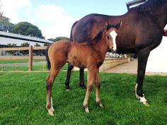 All Too Hard x Makybe Diva filly