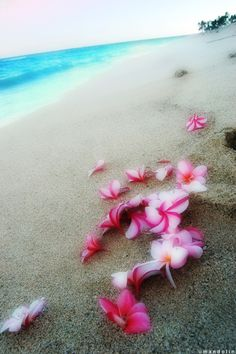 flowers laying on the sand...