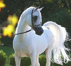 White beauty ❤️