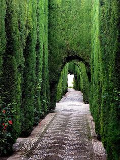 Would love to walk through a garden like this and just breathe...  La Alhambra: Nazari Palace, Granada, Spain