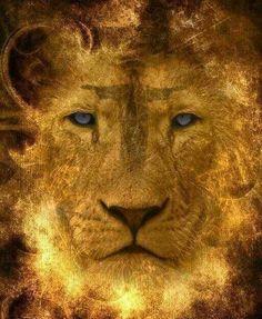 Lion of Judah Prophetic Art painting.