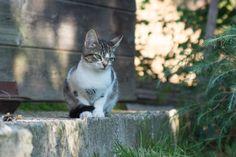 Little cat wondering at Daraka's estate, Vavdos, Mountain Halkidiki
