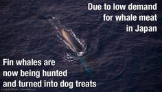 Help stop the whale massacre and save the whales