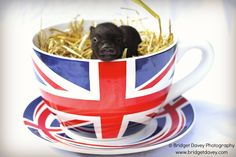 Piggy in a tea cup