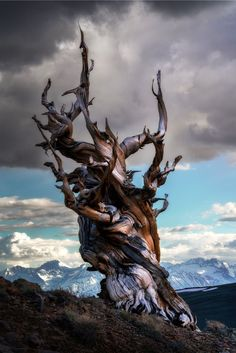 Breathtaking Winners of the 2019 International Landscape Photographer of the Year Contest - Photography, Landscape photography, Photography tips Sierra Nevada, French Photographers, Landscape Photographers, Bonsai, Nambung National Park, Bristlecone Pine, Dame Nature, Isle Of Arran, Capitol Reef National Park
