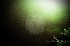 Spider Web Photography,Nature Photography,Insect Photography,Pond Life Photos,Morning sun on Spider Web,Dew on Spider Web,woodland,green by ScatteredBeams on Etsy