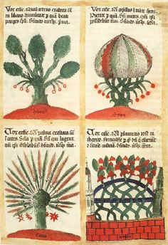 The trees and their symbolic significance: Cedar and the First Beatitude ; Cypress and the Second Beatitude ; Palm-tree and the Third Beatitude ; Rose-Bush and the Fourth Beatitude (chapter 113, f°90r) -- «Liber Floridus», by Lambert of St. Omer, Lille and Ninove, 1460 [KB, Ms 72 A 23] -- See also at: http://adore.ugent.be/OpenURL/app?id=archive.ugent.be:018970A2-B1E8-11DF-A2E0-A70579F64438&type=carousel&scrollto=148