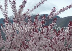 "Blossoms against the Mountains ""Inflorescence"" by WhetherTheStorm on Etsy"