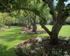 flowers-under-trees