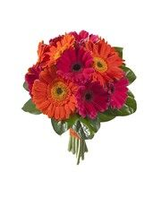 GERBERA DAISY WEDDING PACKAGE  9 pieces • Package Includes:  • One 12-Gerbera Hand-Tied Bridal Bouquet  • Two 6-Gerbera Hand-Tied Attendant's Bouquets  • Two 2-Mini Gerbera Corsages  • Four Single Mini Gerbera Boutonnieres