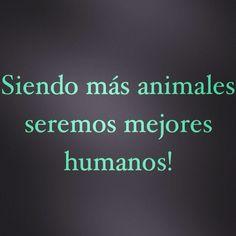 Tenemos mucho que aprender de nuestros animales! Definitivamente....