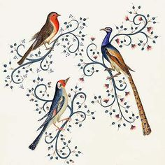 Etude des oiseaux (Rouge-gorge, Paon, Chardonneret) à partir du Missel de Sherborne - début XV° siècle.