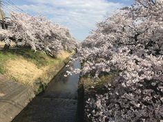 River next to fukaya Station