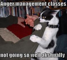 anger management - it didn't work on my cat either! Lol