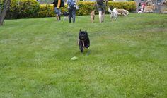 #Pug Runner, #Happiness Pug, #My Little Princess, #Miss Mop