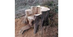 Tree Trunk Chair - Hand Carved